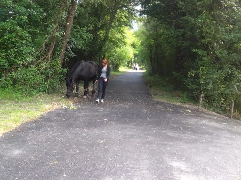 IMG_20140524_cheval